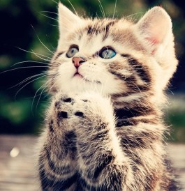 animals-cat-kitten-cute-begging-kitten-wallpaper